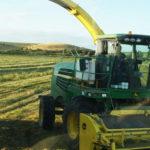 John Deere 7350 sieczkarnia CGFP 150x150 Jelenie w kukurydzy, na czele z sieczkarnią John Deere 7380i   FOTO