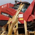 CGFP Case IH kukurydza 2015 film 150x150 Case IH Axial Flow   solidna wydajność przy młóceniu soi