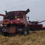 CGFP kukurydza 2015 cz3 150x150 Kombajny Case IH serii 240   kolejne udoskonalenia w modelach na rok 2016