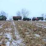 DSCF7231 3 150x150 Pech kombajnu John Deere WTS 9560 w zimowym docinaniu kukurydzy   FOTO