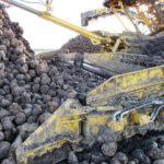 DSCF7236 150x150 Załadunek buraków   w akcji Ropa Euromaus 4   FOTO