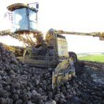 DSCF7238 2 150x150 Załadunek buraków   w akcji Ropa Euromaus 4   FOTO