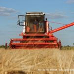 IS DSCF7008.JPG 150x150 4x Claas Lexion i... Bizon Z056 Super w akcji!   FOTO