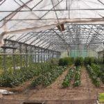 tunel 150x150 Program azotanowy   nowe obowiązki rolników