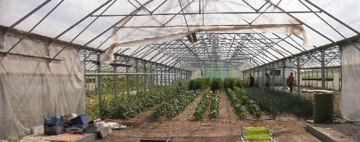 tunel ogrodniczy