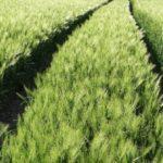 plony rolnictwo nawożenie 150x150 Wyższy zasiłek chorobowy dla rolnika