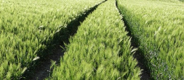 plony-rolnictwo-nawożenie