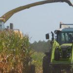 New Holland FR Claas kukurydza kiszonka 2018  film 150x150 CLAAS y w akcji – zbiór lucerny w RSP Kazin   VIDEO
