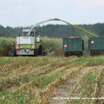 IS DSCF7016 2.JPG 150x150 W suszy też się można zakopać! Ursusy i Claas Jaguar 880 w kukurydzy   FOTO