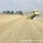 IS DSCF7051 3.JPG 150x150 4x Claas Lexion i... Bizon Z056 Super w akcji!   FOTO
