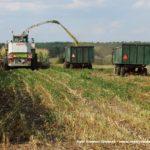 IS DSCF7053 3.JPG 150x150 W suszy też się można zakopać! Ursusy i Claas Jaguar 880 w kukurydzy   FOTO