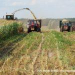 IS DSCF7057.JPG 150x150 W suszy też się można zakopać! Ursusy i Claas Jaguar 880 w kukurydzy   FOTO