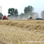 IS DSCF7116 2.JPG 150x150 4x Claas Lexion i... Bizon Z056 Super w akcji!   FOTO