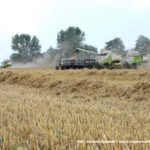 IS DSCF7128 2.JPG 150x150 4x Claas Lexion i... Bizon Z056 Super w akcji!   FOTO