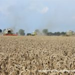 IS DSCF7162 2.JPG 150x150 4x Claas Lexion i... Bizon Z056 Super w akcji!   FOTO