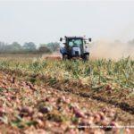 IS DSCF7021.JPG 150x150 Zbiór cebuli na Kujawach 2018, w polu New Holland, DeWulf, Samon   FOTO