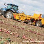 IS DSCF7036.JPG 150x150 Zbiór cebuli na Kujawach 2018, w polu New Holland, DeWulf, Samon   FOTO