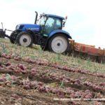 IS DSCF7048.JPG 150x150 Zbiór cebuli na Kujawach 2018, w polu New Holland, DeWulf, Samon   FOTO