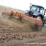 IS DSCF7056.JPG 150x150 Zbiór cebuli na Kujawach 2018, w polu New Holland, DeWulf, Samon   FOTO