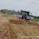 IS DSCF7059.JPG 150x150 Zbiór cebuli na Kujawach 2018, w polu New Holland, DeWulf, Samon   FOTO