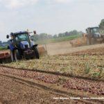 IS DSCF7085.JPG 150x150 Zbiór cebuli na Kujawach 2018, w polu New Holland, DeWulf, Samon   FOTO