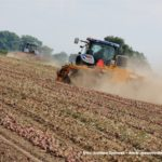 IS DSCF7088.JPG 150x150 Zbiór cebuli na Kujawach 2018, w polu New Holland, DeWulf, Samon   FOTO