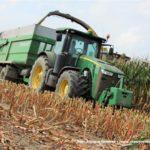 IS DSCF7098 2.JPG 150x150 Jelenie w kukurydzy, na czele z sieczkarnią John Deere 7380i   FOTO