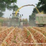 IS DSCF7099.JPG 150x150 Jelenie w kukurydzy, na czele z sieczkarnią John Deere 7380i   FOTO