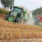 IS DSCF7101.JPG 150x150 Jelenie w kukurydzy, na czele z sieczkarnią John Deere 7380i   FOTO