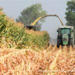 IS DSCF7112.JPG 150x150 Jelenie w kukurydzy, na czele z sieczkarnią John Deere 7380i   FOTO