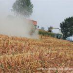 IS DSCF7117.JPG 150x150 Jelenie w kukurydzy, na czele z sieczkarnią John Deere 7380i   FOTO