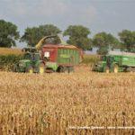 IS DSCF7129.JPG 150x150 Jelenie w kukurydzy, na czele z sieczkarnią John Deere 7380i   FOTO