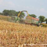 IS DSCF7141.JPG 150x150 Jelenie w kukurydzy, na czele z sieczkarnią John Deere 7380i   FOTO
