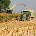 IS DSCF7150.JPG 150x150 Jelenie w kukurydzy, na czele z sieczkarnią John Deere 7380i   FOTO