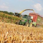 IS DSCF7152.JPG 150x150 Jelenie w kukurydzy, na czele z sieczkarnią John Deere 7380i   FOTO