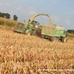 IS DSCF7160 2.JPG 150x150 Jelenie w kukurydzy, na czele z sieczkarnią John Deere 7380i   FOTO