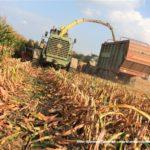 IS DSCF7184 2.JPG 150x150 Jelenie w kukurydzy, na czele z sieczkarnią John Deere 7380i   FOTO