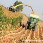 IS DSCF7192.JPG 150x150 Jelenie w kukurydzy, na czele z sieczkarnią John Deere 7380i   FOTO