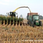 IS DSCF7199.JPG 150x150 Jelenie w kukurydzy, na czele z sieczkarnią John Deere 7380i   FOTO