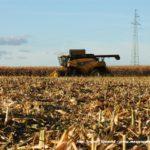 IS DSCF7052.JPG 150x150 New Hollandy w kukurydzy   FOTO