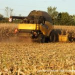 IS DSCF7056.JPG 150x150 New Hollandy w kukurydzy   FOTO
