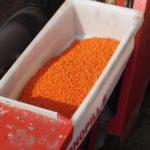 DSCN6756 150x150 Siew buraków w RZD Minikowo   w polu Case IH Puma 145 + siewnik Kverneland (FOTO)