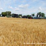 IS DSCF7009 150x150 Fendt IDEAL na Wielkopolskim polu   FOTO