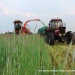 IS DSCF7024 150x150 Polska sieczkarnia samojezdna ORKAN Z350/3 – zielonkowy unikat – FOTO