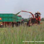 IS DSCF7027 1 150x150 Polska sieczkarnia samojezdna ORKAN Z350/3 – zielonkowy unikat – FOTO