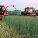 IS DSCF7031 150x150 Polska sieczkarnia samojezdna ORKAN Z350/3 – zielonkowy unikat – FOTO