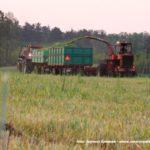 IS DSCF7042 150x150 Polska sieczkarnia samojezdna ORKAN Z350/3 – zielonkowy unikat – FOTO