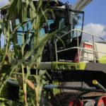 """Claas SHREDLAGE nowy zbior kiszonki 150x150 Jak ciąć kukurydzę na kiszonkę? Specjaliści z programu """"Krowie na Zdrowie"""" radzą"""