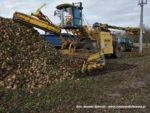 IS DSCF7031 2 150x113 John Deere 6195M I 8400R w akcji! Odbiór buraków na Kujawach – FOTO