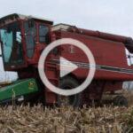International w kukurydzy film 150x150 Kukurydza z John Deere W650 + ciągniki 8230, 6195M, 6155M, 6930   VIDEO